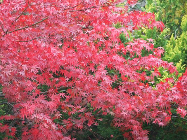 紅葉の遠野